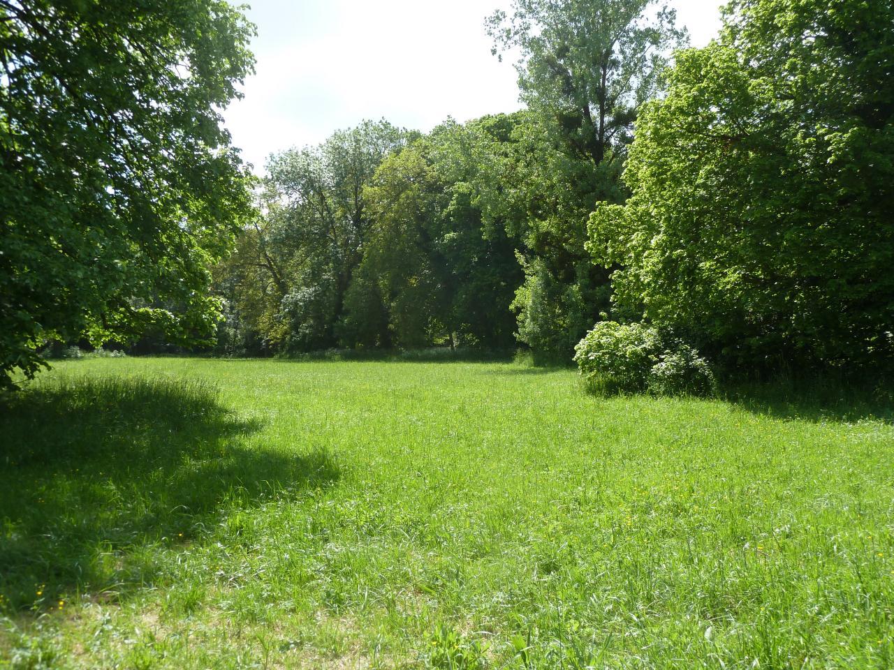 Prairie pour la récolte des plantes sauvages