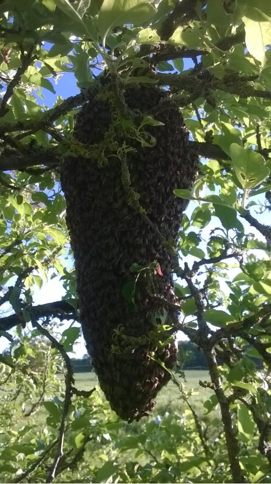 Essaim sur une branche
