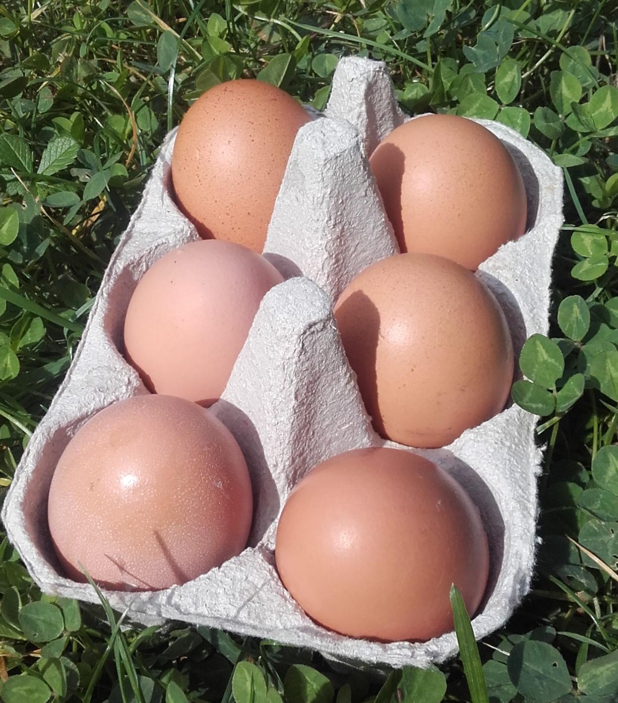 des Oeufs de poulettes qui courent dans les champs !